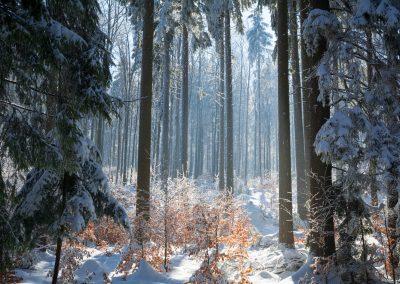 Las w pobliżu Słoszówki
